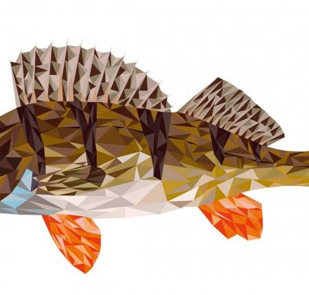 Östersjöfiskar | Fish from the Baltic sea