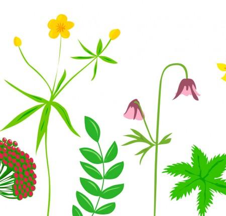 Blomsteräng | Field of flowers